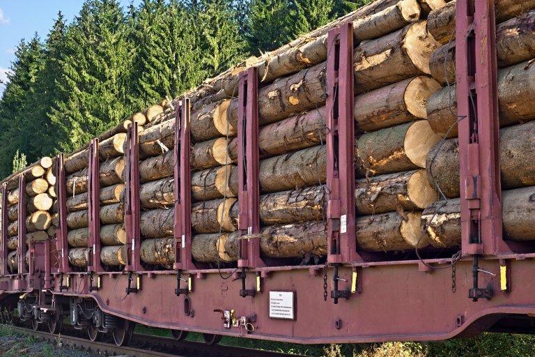 Экспорт круглого леса упал на 14%