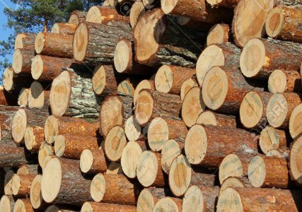 Германия увеличивает экспорт круглого леса хвойных пород в Китай