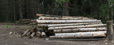 Фіктивні підприємці вивезли тисячі кубометрів чернігівського лісу у Туреччину та Пакистан