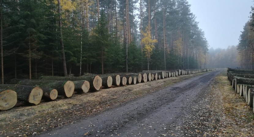 У лесоводов  Польши в разгаре осенние  торги ценными сортиментами древесины