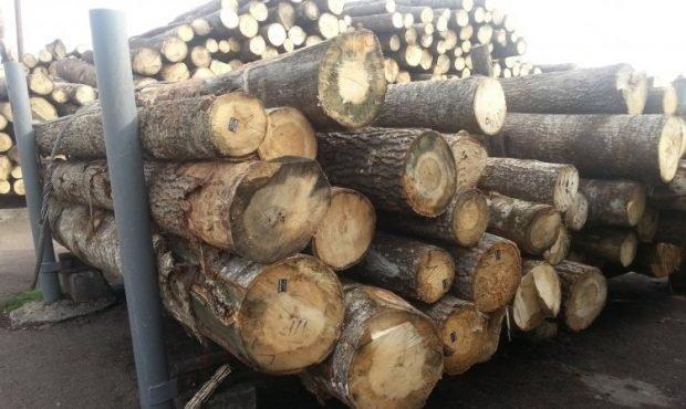 Митники та лісники піймалися на відправленні контрабандою ешелонів лісу до ЄС
