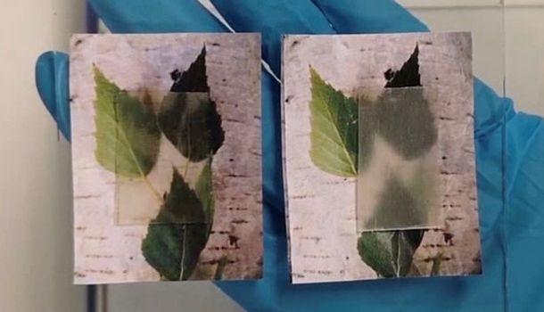 Ученые из Швеции представили прозрачную древесину