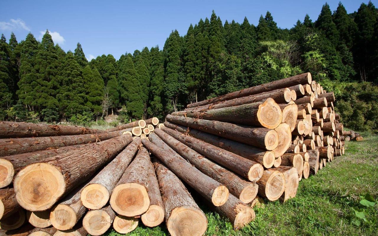 Экспорт необработанной древесины как угроза российскому лесу