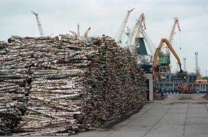 В Латвии выросли импорт и экспорт продукции лесной отрасли