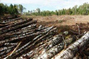 У Порошенко объяснили ветирование закона о вырубке лесов