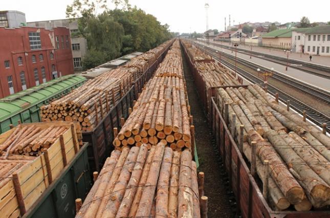 В офісі Зеленського хочуть переглянути мораторій на експорт лісу через його неефективність