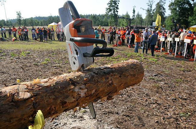 Мораторий на экспорт леса. Эндшпиль