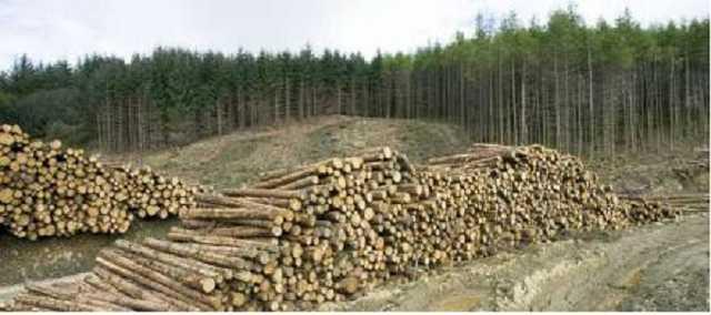 Уничтожение леса. Как ЕС стимулирует украинскую коррупцию