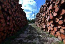 Контрабанда на государственном уровне: из Украины под видом дров в Европу вывозят украинский лес