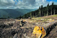 Украинский лес рубят — щепки летят