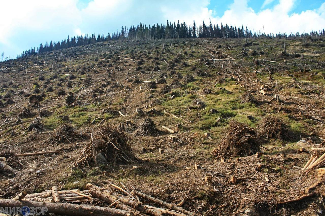 Популісти не рятують українські ліси, вони сприяють зароблянню брудних грошей