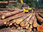 Держлісагентство планує запустити пілотний e-реєстр лісорубних білетів
