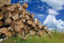 Експортовану в Європу під виглядом дров українську деревину використовують не за призначенням, — ЗМІ