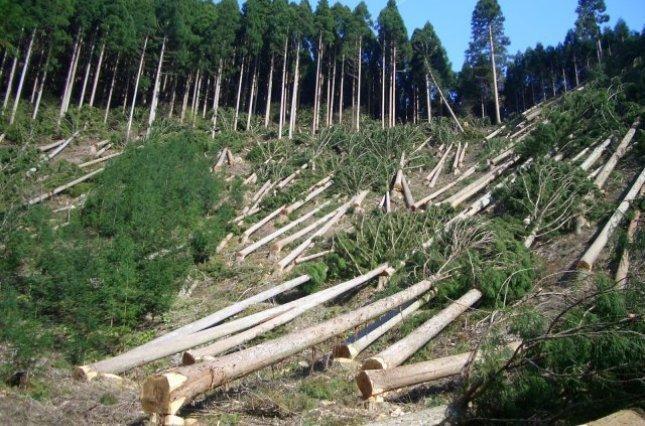 Чи буде Зеленський проводити реформи у лісовому секторі?