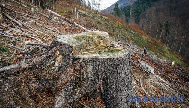 Активісти поінформують Євросоюз про нелегальну вирубку лісів в українських Карпатах