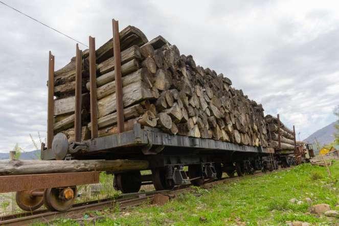 You are currently viewing Одна п'ята незаконної деревини з України потрапляє до Польщі
