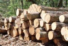 Лесхозы Беларуси увеличили переработку леса на 13%, экспорт лесоматериалов – на 8%