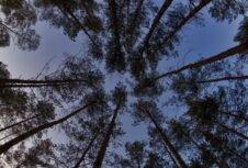 Вместе с ЕС против контрабанды леса: почему другим странам не нужен мораторий