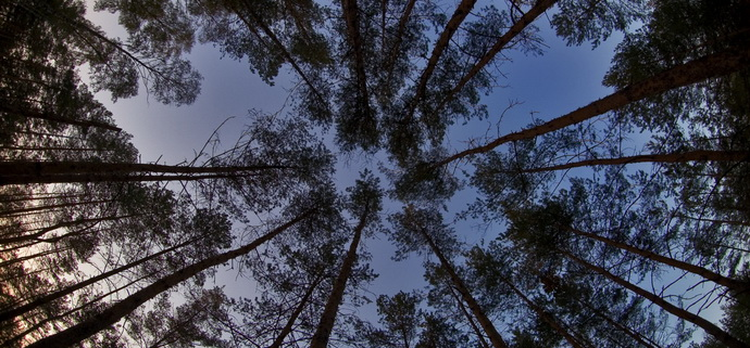 Дело — дрова: на Херсонщине на вырубку сухостоя даже лесхоз не имеет права