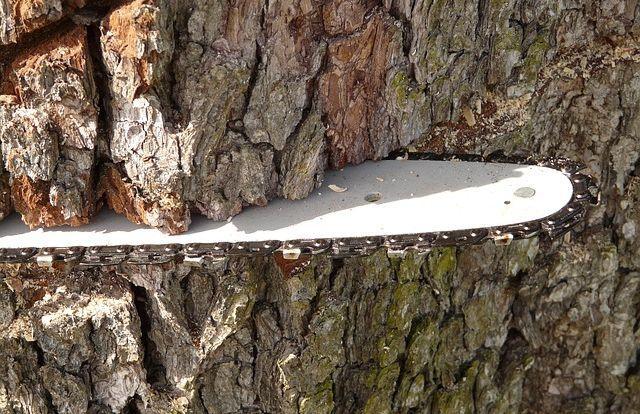 Незаконна вирубка лісу. Як українські лісозаготівники обходять зако