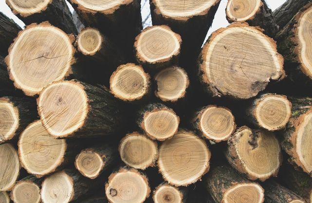 Експорт деревини з України скоротився втричі — ДФС