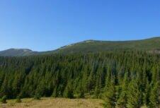 Украинские леса позволили сказочно обогатиться нескольким жителям страны — эколог