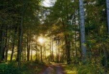 Тривають консультації щодо скасування мораторію на експорт лісу-кругляка