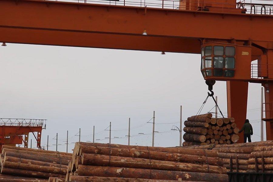 Новая Зеландия экспортировала в Китай круглого леса во 2 квартале 2019 г. на 27,2% больше