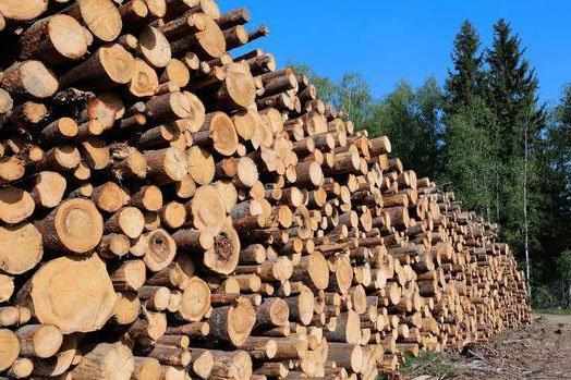 Цены на экспорт круглого леса в Новой Зеландии достигли дна после падения