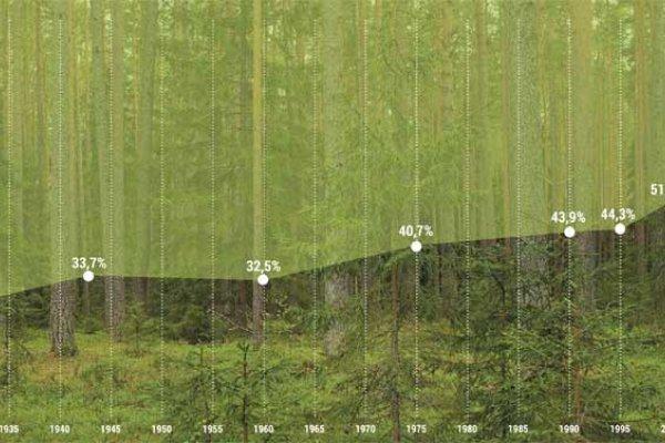 Лесное завтра: насколько инновационным может быть будущее леса?