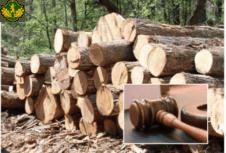 Про деякі питання організації заходів у галузі  лісовогогосподарства та забезпечення проведення  прозорого продажу деревини