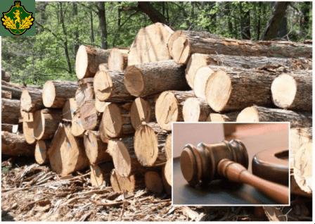 Read more about the article Про деякі питання організації заходів у галузі  лісовогогосподарства та забезпечення проведення  прозорого продажу деревини