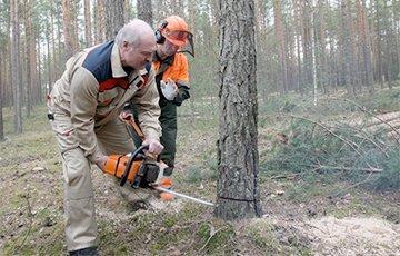 Лукашенко разрешил вывозить из Беларуси лес-кругляк