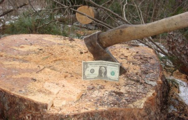 Нелегальная вырубка леса в Украине: кто крышует браконьеров