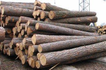 На Волині депутат заробляє мільйони на торгівлі лісом і не платить податки