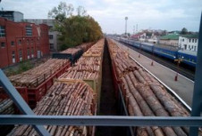 Из Украины вывозятся миллионы тонн древесины под видом дров «длиной в 2 метра» для изготовления мебели в ЕС