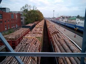 Садовый рассказал, как на таможне дрова превращаются в кругляк