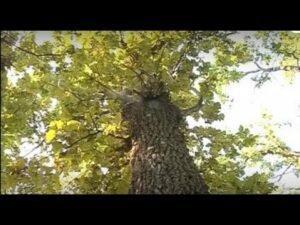 Черкаські «ляшківці» просять про посилення покарання за вирубку лісів
