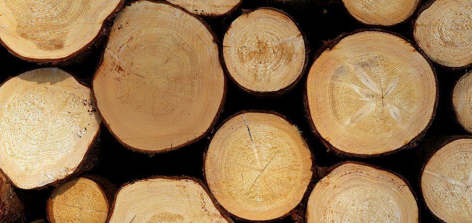 Ситуация на рынках круглого леса. Бавария