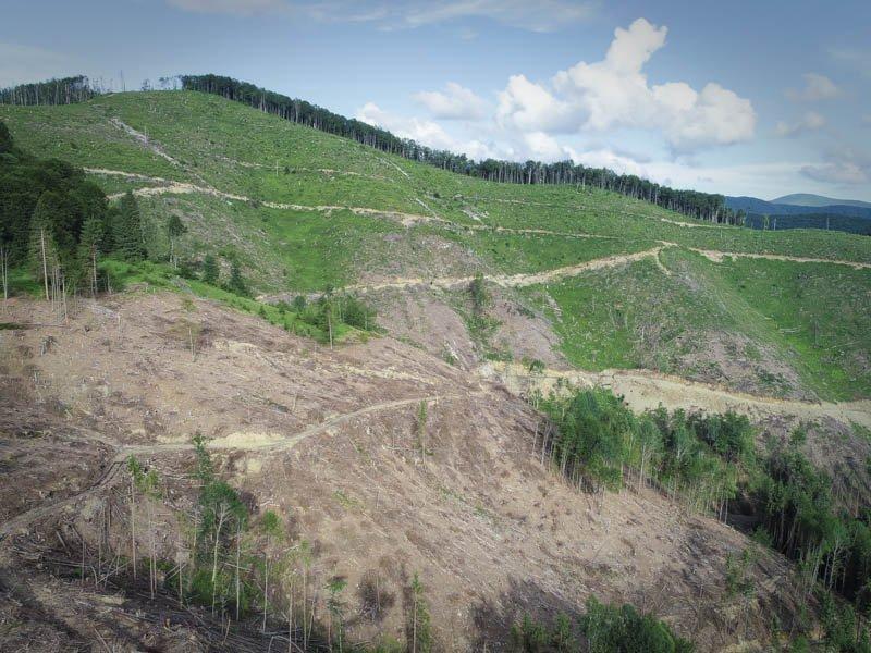 WWF подав скаргу до Федеральної служби лісів через імпорт нелегальної деревини з України