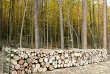 Держлісгоспи Вінниччини у 2018 році реалізували понад 244 тисяч кубометрів дров паливних