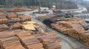 Экспорт леса: что изменится в Украине после принятия закона