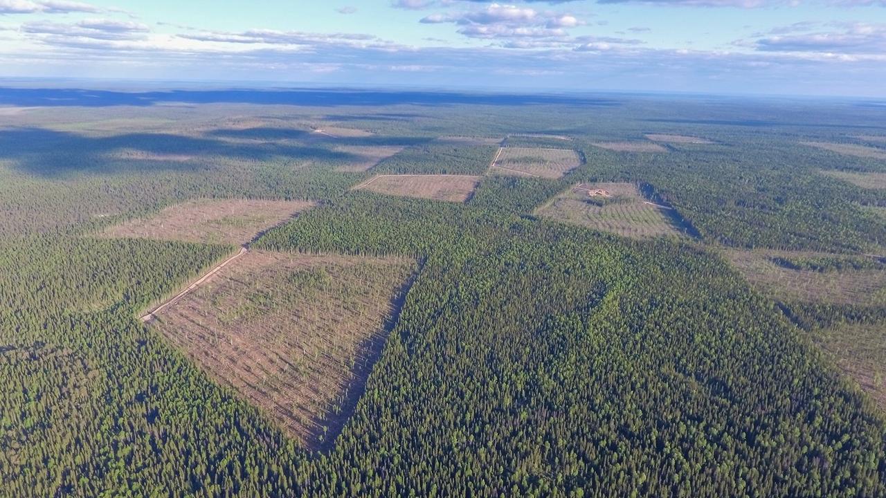 Спасет ли российские леса запрет на экспорт необработанной древесины?