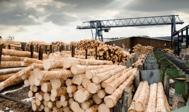 You are currently viewing Стало відомо скільки мільярдів Україна заробила на деревині