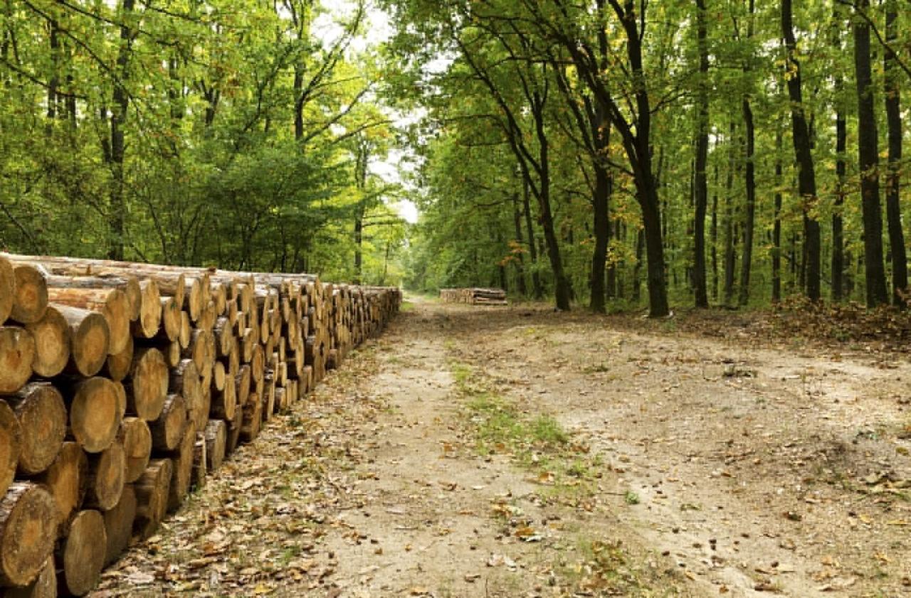 В темно-синем лесу. ТОП-5 коррупционных схем в украинских лесах