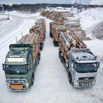 Куди дівається вітчизняна деревина?