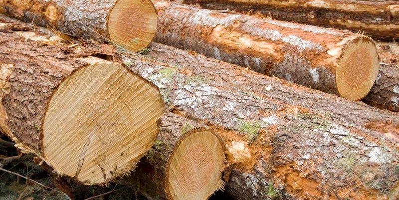 Чиновников Гослесагентства уличили в контрабанде древесины в Румынию+ …или меморандум Гослесагентства и НАБУ начинает работать…