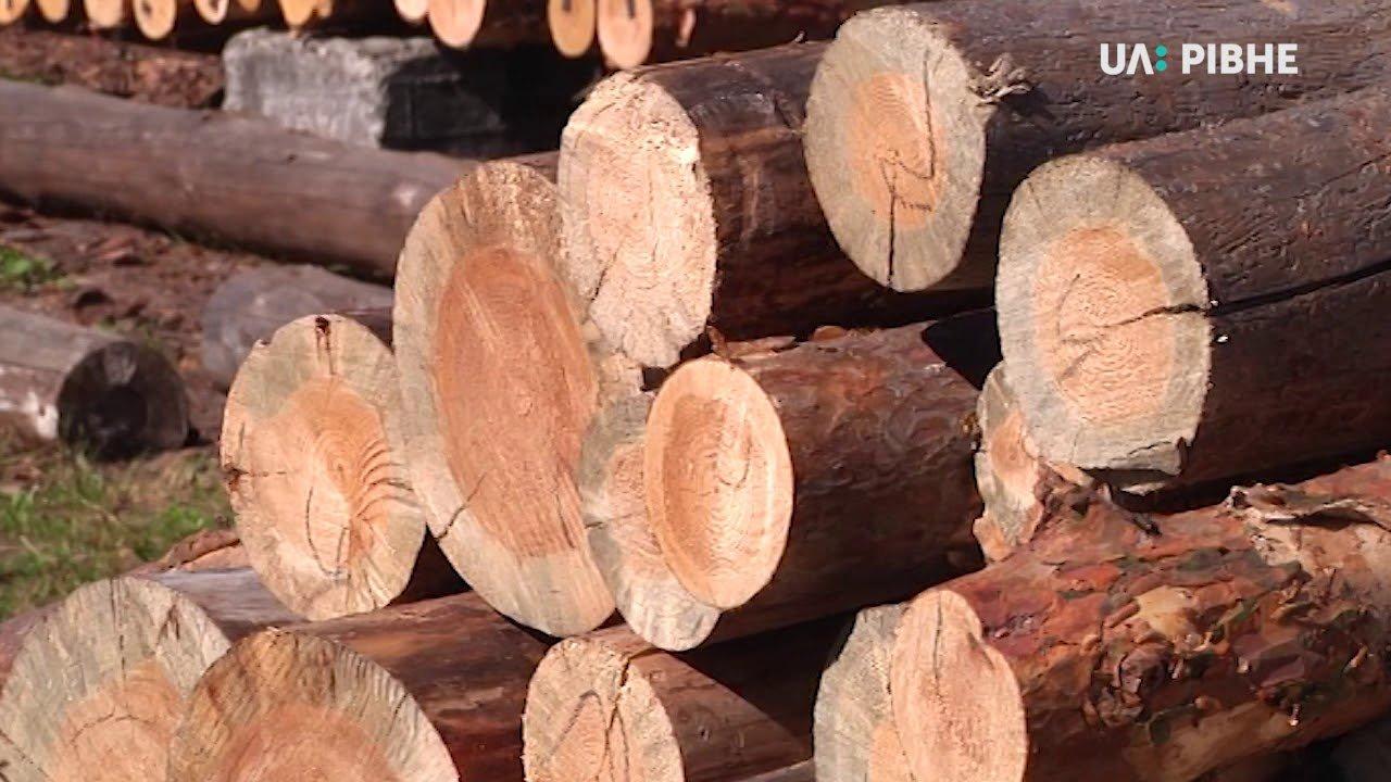 Лісівники Рівненщини проситимуть депутатів про кримінальну відповідальність за незаконний збут лісу