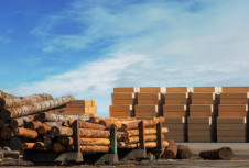 Анализ: будет ли в будущем огромная потребность Китая в древесине все еще зависеть от импорта?