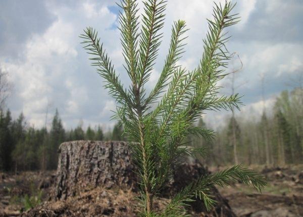 Read more about the article СТОП ФЕЙК – навіщо обливають брудом порядних лісівників?АНАЛІТИКА